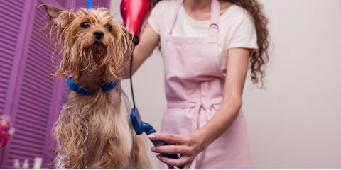 3 Ways to Calm an Anxious Pet During Dog Grooming, Newport-Fort Thomas, Kentucky