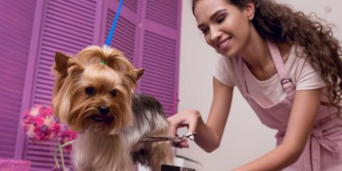 A Guide to Extreme Dog Grooming & Which Pets It's Right for, Avon, Ohio