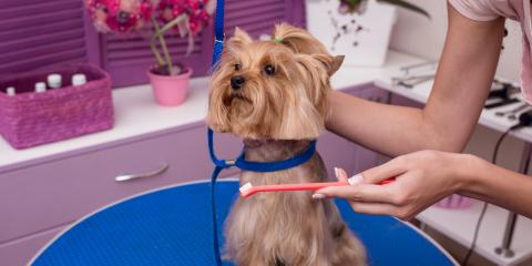 3 Signs Your Dog Needs Pet Dental Care, Covington, Kentucky