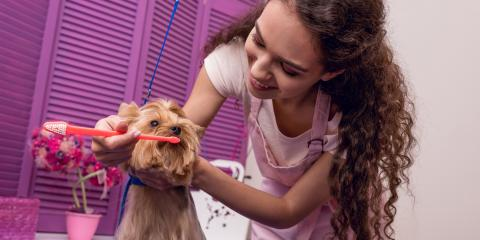 Why Your Pet's Dental Health Is Important, Amsterdam, Virginia