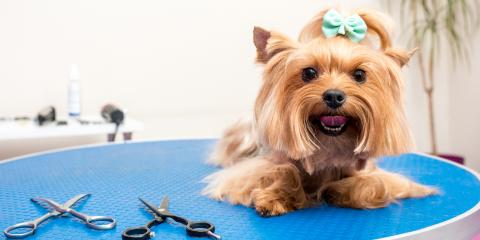4 Ways to Keep Your Dog Clean Between Grooming Appointments, Highland Village, Texas
