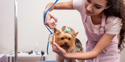 6 Benefits of Pet Grooming for Your Dog, Statesboro, Georgia