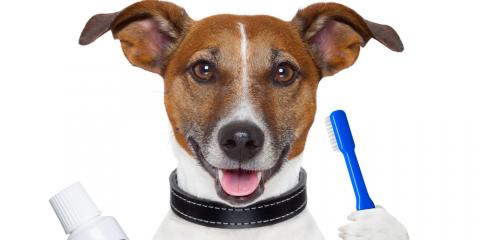 3 Pet Dental Care Tips From Daleville's Best Veterinarian, Amsterdam, Virginia
