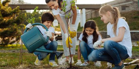 How to Plant a New Tree the Right Way, St. Charles, Missouri