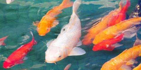 Landscape Design Tips: How to Maintain Your Koi Pond, Victoria, Alabama