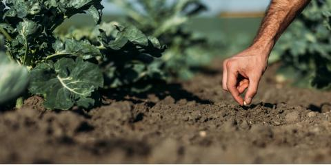 What Are the Benefits of Organic Soil?, Henrietta, New York