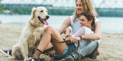 How to Keep Senior Dogs Active, Clarksville, Arkansas