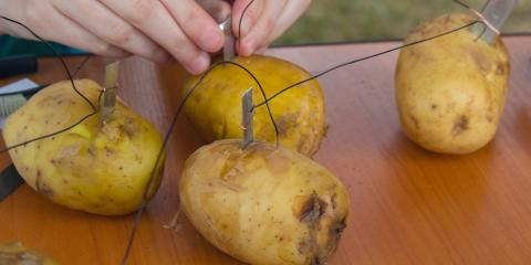 West Chester Electrical Contractor Explains Why Potato Lightbulbs Work, West Chester, Ohio