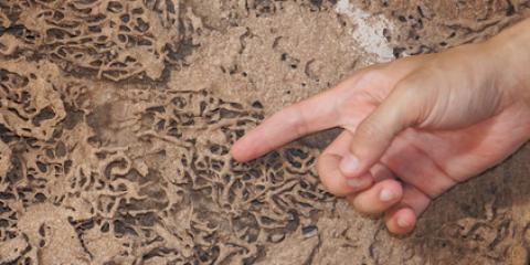 3 Signs You Need Spring Termite Control, Cincinnati, Ohio