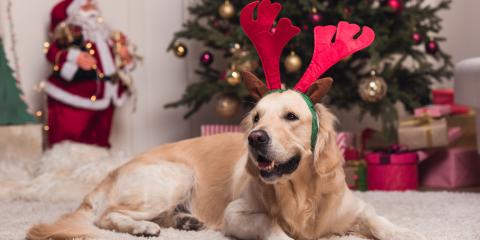4 Holiday Foods to Avoid Giving Pets, Elyria, Ohio
