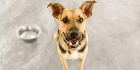 Veterinarian Advice: 3 Factors to Consider When Choosing a Dog Food, Rosenberg-Richmond, Texas