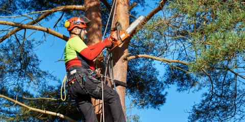 3 Signs You Need Tree Removal, South River, Virginia