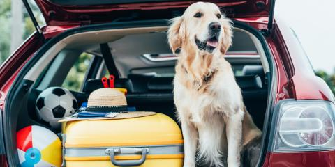 How to Bring a Pet on Vacation, Huntersville, West Virginia