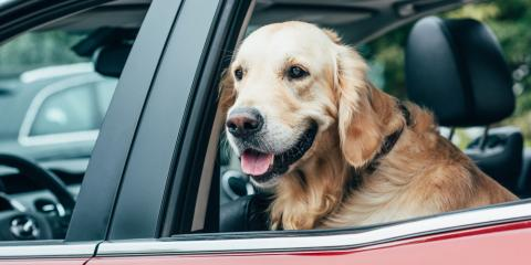 What Are the Guidelines for Driving With a Dog?, Ewa, Hawaii