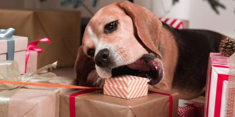 5 Holiday Foods to Keep Away From Your Dog, Mineral Springs, North Carolina