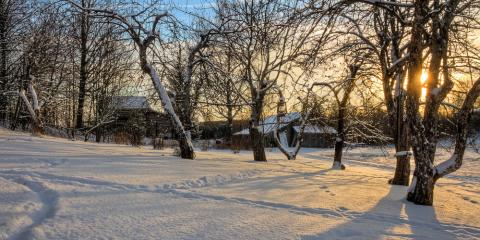 3 Winter Care Tips to Keep Your Trees Healthy All Year, Waverly, Nebraska