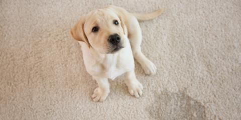 How to Clean the Most Common Carpet Stains, St. Charles, Missouri