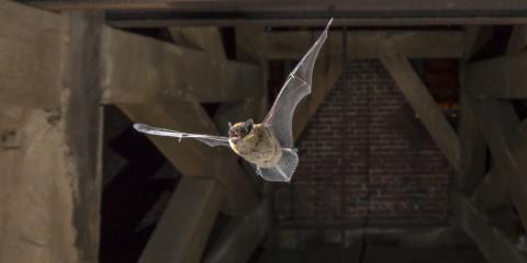 What Every Homeowner Should Know About Bat Removal, Miami, Ohio