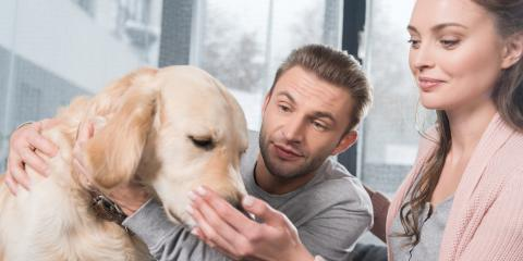 3 HVAC Adjustments You Should Make If You Have a New Pet, Branson, Missouri