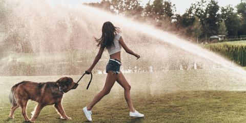 5 Animal Care Tips to Keep Your Dog Cool This Summer, Springfield, Ohio