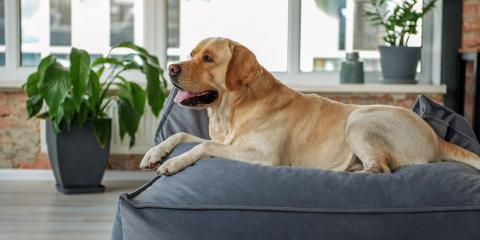 3 Ways to Help Your Dog Lose Weight, Kalispell, Montana