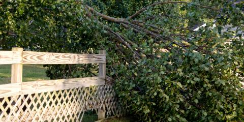 3 Steps to a Successful Storm Cleanup, Hawthorne, Florida
