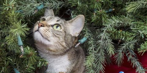 How to Cat-Proof Your Christmas Tree, Columbia, Missouri