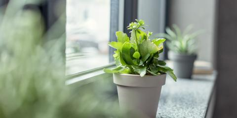A Beginner's Guide to Caring for House Plants, Manhattan, New York