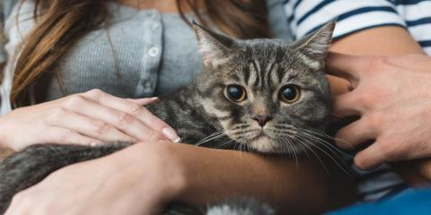 What to Know About Cat Pregnancy, San Marcos, Texas
