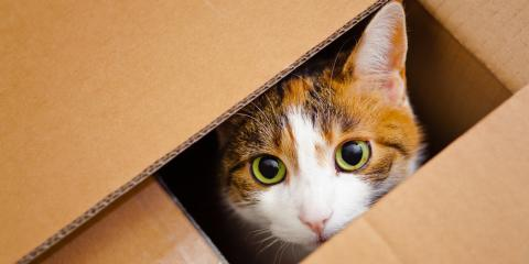 What Are Some Common Myths About Cats?, Dothan, Alabama