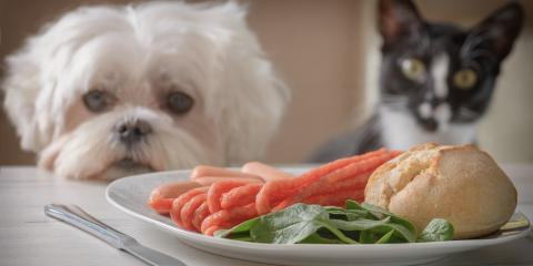 6 Thanksgiving Pet Wellness Tips, Avon, New York