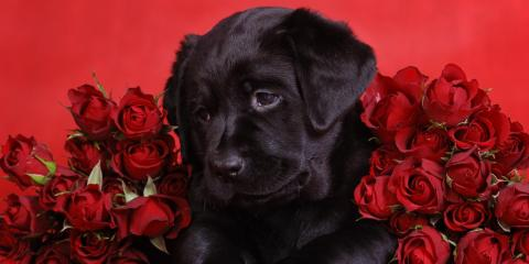 4 Pet Care Tips to Keep Your Furry Friend Safe on Valentine's Day, Miami, Ohio