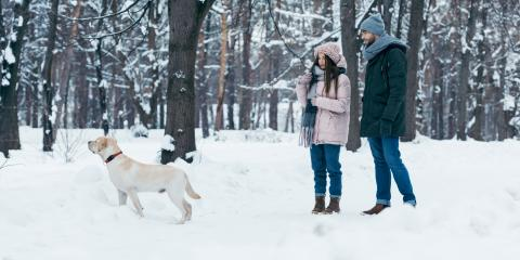 5 Ways to Keep Your Pet Active This Winter, Prairie du Chien, Wisconsin