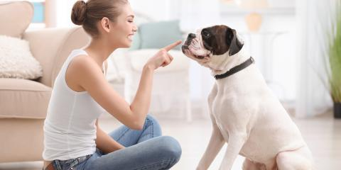 How to Socialize Your New Pet Safely & Effectively, Batavia, Ohio