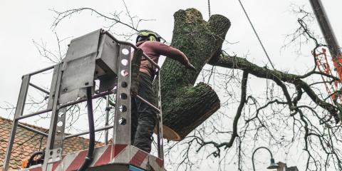 4 Questions to Ask Before Hiring a Commercial Tree Care Service, Anchorage, Alaska