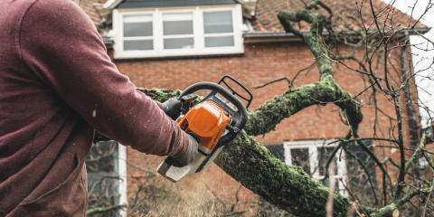 3 Reasons to Remove a Dead Tree, Miamitown, Ohio