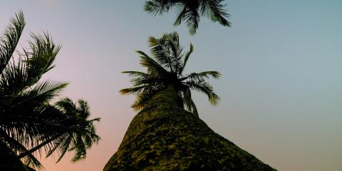 3 Common Parasites That Could Attack Your Palm Trees, ,