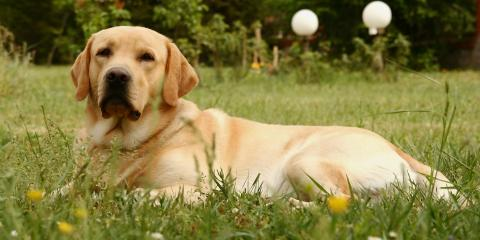 A Quick Guide to Hip Dysplasia in Dogs, Columbia, Missouri