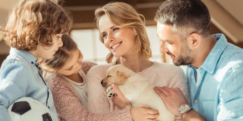 5 Essential Pet Supplies for New Puppies, Clifton, Texas