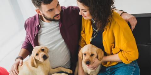 A Guide to Dogs & Chocolate, Dothan, Alabama