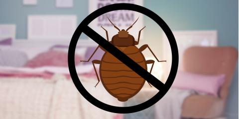 June Special on Bed Bug & Termite Treatment!, West Plains, Missouri
