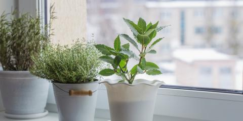 How Does Home Window Tinting Affect Your Plants?, Granite City, Illinois