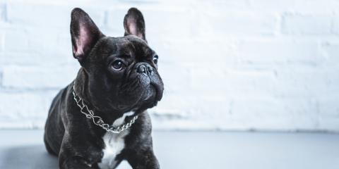 5 Signs Your Pet Has Fleas, Hilton, New York