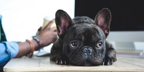 What Is Veterinary Compounding?, Cincinnati, Ohio
