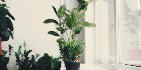 3 Pointers for Moving Potted Plants Indoors, Fairfield, Ohio