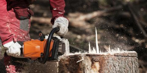 3 Top Reasons to Use Stump Removal, Seymour, Wisconsin