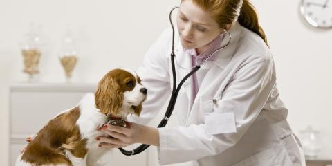 A Pet Care Guide to Heartworm Disease , Baraboo, Wisconsin