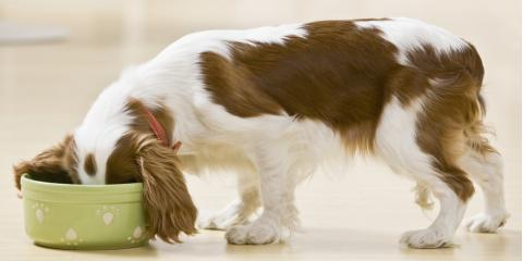 What Type of Pet Food Should You Buy for Your Puppy?, Manhattan, New York