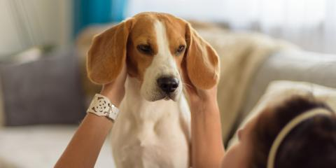 What to Know about Hematomas in Dogs, Columbia, Missouri