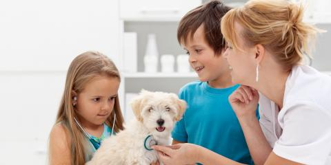 How to Get Your Puppy Ready for Their First Vet Appointment, Honolulu, Hawaii